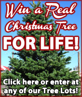 CA Christmas Tree Give Away
