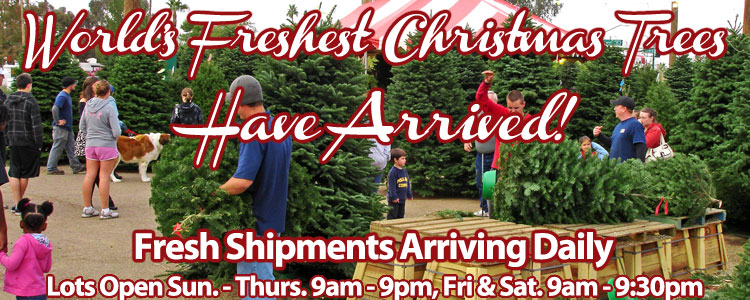 buy your christmas tree online and get your christmas tree delivered set up hassle free or stop by one of our las vegas area christmas tree lots and pick - Buy Christmas Tree