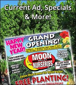 moon valley nursery, moon valley nursery specials