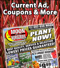 moon valley nursery, moon valley nursery specials