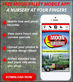moon valley nursery, buy trees online, whitfill nursery