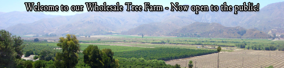 Moon Mountain Tree Farm - Online Tree Nursery